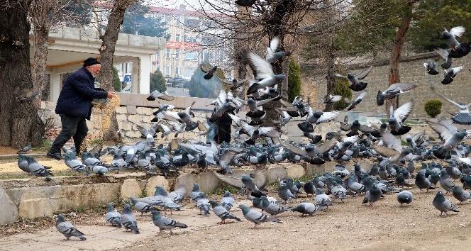 AÇ KALAN GÜVERCİNLERİ,DUYARLI ESNAFLAR YEMLİYOR