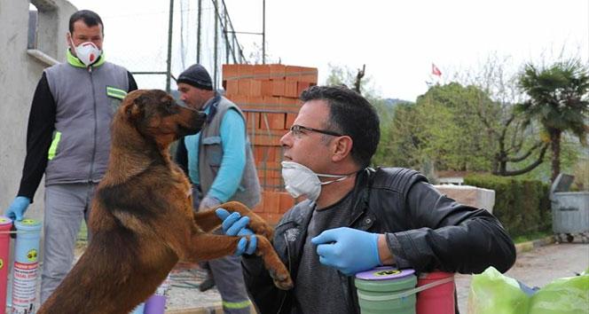 İçişleri Bakanlığından 81 İL Valiliğine 'Sokak Hayvanları' konulu genelge