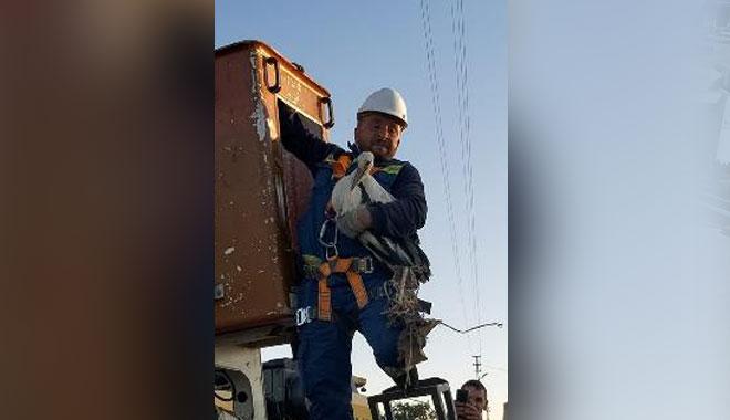 YOZGAT'TA ENERJİ TİMLERİNDEN LEYLEK KURTARMA OPERASYONU
