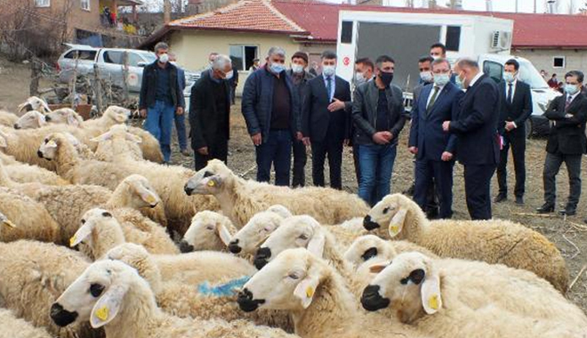 YOZGAT'TA 48 BESİCİYE 100'ER KOYUN TESLİM TÖRENİ