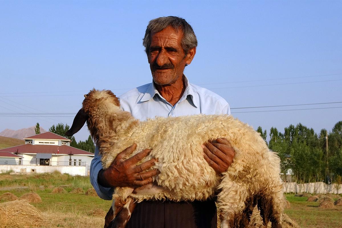 Bataklığa saplanan ineği hayatını değiştirdi